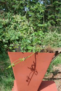 Häcksler für Gartenabfälle
